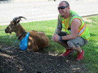 A man and his goat - Pair walking through state for charity