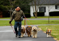 Photo Gallery - A walk with man???s best friends