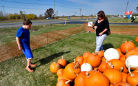 Photo gallery - Finding the perfect pumpkin