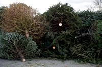 Photo gallery - Christmas tree recycling