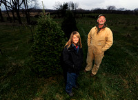 Harvest-your-own Christmas trees becoming popular