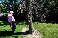 Proactive owners can curb effects of emerald ash borer